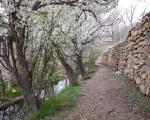 آمد بهار خرم با رنگ و بوی طیب (رودکی)