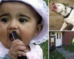 سگ بولداگ دختر بچه نوپا را خورد! +عکس
