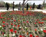 گزارش تصویری از باغ گلها در اصفهان