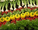 آیامراحل شستشوی سبزیجات را میدانید؟