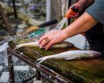 مصرف ماهی چرب در بارداری و کاهش ابتلای جنین به آسم