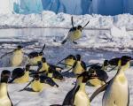 روز جهانی پنگوئن / از پنگوئنهای بزرگ امپراتور تا گونه کوچک این موجودات دوستداشتنی در قاب تصاویر