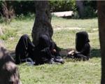 دختران آلمانی در مسیر پیوستن به داعش