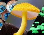 تنوع قارچ در استرالیا+تصاویر