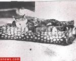عکس: معروفترین و محبوبترین گربه قاجار