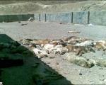 سگ کشی بیرحمانه در تبریز! +عکس