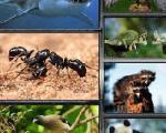 اطلاعاتی جالب از سرسختترین موجود تا مورچههاى احساساتى