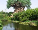 درخت شگفت انگیز