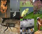 ستارههای المپیك دنیای حیوانات