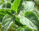 سبزی های بهاری را بشناسید + روش مصرف