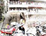 فیلی که به خرید آمده بود