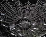 راز استحكام فوقالعاده تار عنکبوت كشف شد