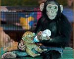 باهوش ترین حیوانات دنیا + تصاویر