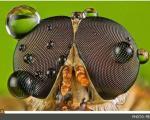 چهره دیدنی حشرات از نزدیكترین نما!