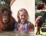 تصاویر باور نکردنی از دوستی دختری با اورانگوتان
