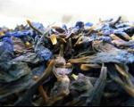 چند نکته در مورد گل گاوزبان