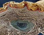نقش سلولهای مرده پوست در آلودگی هوا