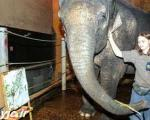 فیل نقاش میلیونر میشود +عکس