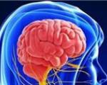 ورزش یا تمرین ریاضی/ کدام در محافظت از مغز موثرترند؟