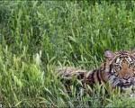 باغ وحش تهران تحت تعقیب قضایی قرار گرفت