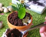 چگونگی تعویض گلدان گیاهان