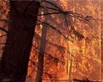 ادامه تراژدی آتشسوزی پارک ملی گلستان