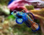 زیباترین گونه های ماهی در جهان +عکس