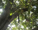 جوان 24 ساله خودش را از درخت گردو حلق آویز کرد + عکس