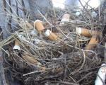 عکس: سیگارهایی که پایه زندگی اند!
