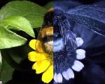 جهان را از چشم زنبورها ببینید(+عکس)