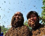 زندگی زوج چینی با میلیون ها زنبور!