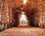 پاییز رویایی در ابیانه، کاشان و کرج