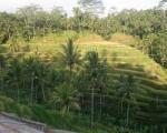 جزیرهای که هم یادآور «یانگوم» است و هم «خانواده دکتر ارنست» + تصاویر