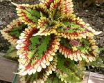 باغبانی با برترینها: حسن یوسف
