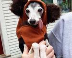 سگی شبیه به «سیـد» در عصر یخبندان!