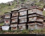 حمله حشرات موذی به کندوهای عسل