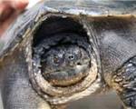 کشف لاکپشت زنده ۵۰۰ ساله+عکس