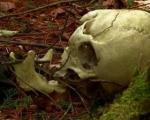 جنگلی برای خودکشی+ عکس(+13)
