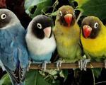 تصاویر فوق العاده زیبا از دنیای پرندگان (4)