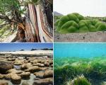 قدیمیترین موجودات زنده جهان رونمایی شدند + تصاویر