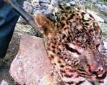 کشتار بی رحمانه یک پلنگ در تایباد +عکس