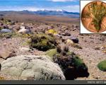 عجیبترین گونههای 2012 در آلبوم دانشمندان