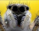 تصاویری از نمای نزدیک صورت حشرات/ در چشم حشرات زل بزنید