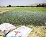 آبیاری زمین های کشاورزی تهران با آب فاضلاب