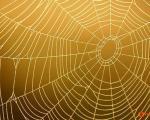 تنیدن قویترین تار جهان با عنکبوتهای نانو!
