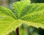 گیاهان لمس شما را میفهمند!