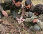 کشف لاشه یک پلنگ ایرانی در پارک ملی گلستان (+تصاویر)