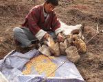 عکسهایی از بوتان، سرزمین اژدهای غرّان