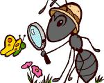 هوس های مورچه ای