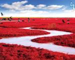 مناظر رنگارنگ باورنکردنی از زمینِ زیبا